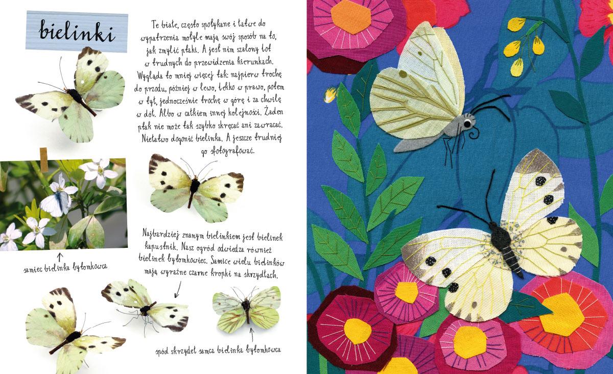 Image result for mały atlas motyli ewy i pawła pawlaków